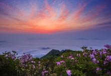 신불산의 봄