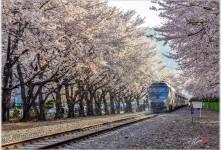 어느새 봄이....